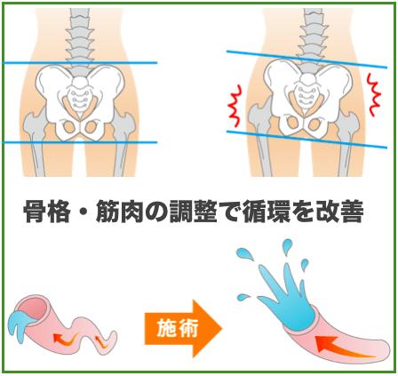 骨格・筋肉の調整で循環を改善